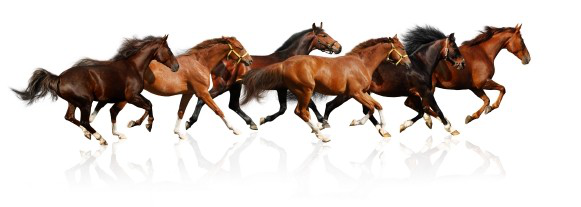 horses-running.png